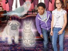 The Haunted Hathaways: 10 Signs You Have A Ghost Pet