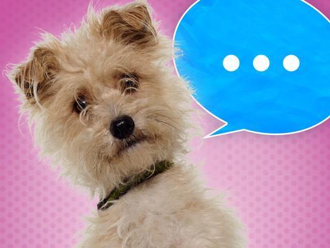 Nicky, Ricky, Dicky & Dawn: Visão Canina