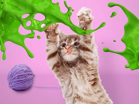 Kittens' Choice Awards