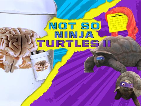 Teenage Mutant Ninja Turtles: Not So Ninja Turtles Part II