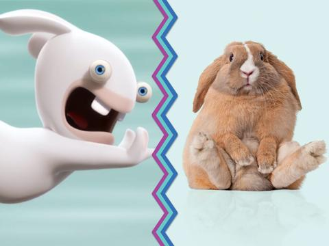 Rabbids Vs. Rabbits