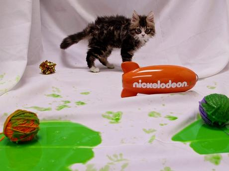 LOL... Kitties Get Slimed!
