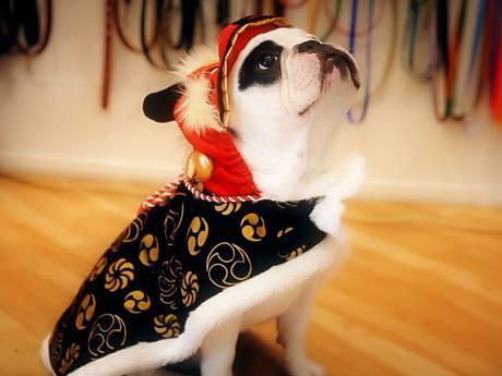 Pierre sceglie il suo vestito da Tappeto Arancione