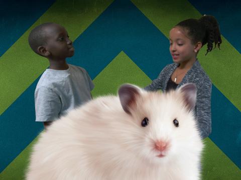 Hamster Gigante