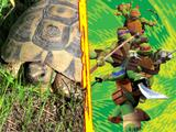 "Tortugas Ninja: ""10 hechos interesantes"""