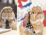 Le lapin le plus stylé du monde !
