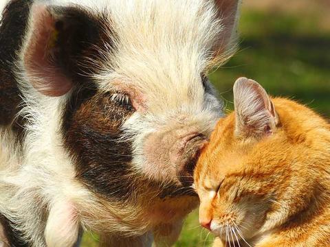 Napi cuki: cica és malac két jó barát
