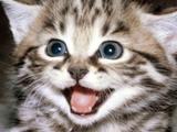 9 coisas que provavelmente não sabias sobre gatos