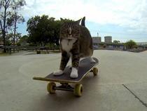 Skateboard-uri pentru pisici