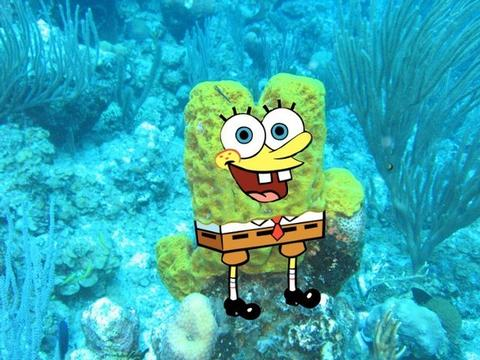 Ilyenek lennének Spongyáék a valóságban