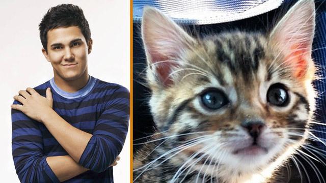 Карлос Пена и Алекса Вега завели котёнка
