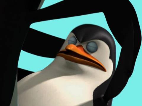 when the penguins fight