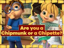 Are You A Chipmunk Or A Chipette?