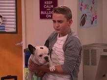 Toughie the Bulldog