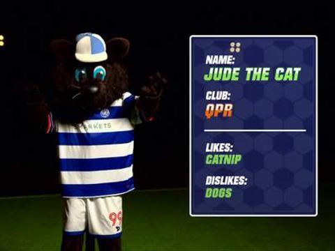 Jude The Cat