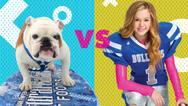 Real Bulldogs vs. Bella And The Bulldogs