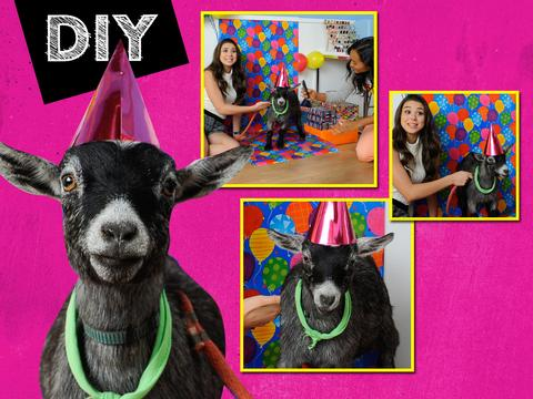 DIY: Glamour Pics Of Your Pet!