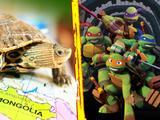 Ţestoasele obişnuite vs. Ţestoasele ninja