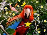 Fairly Odd Parrots