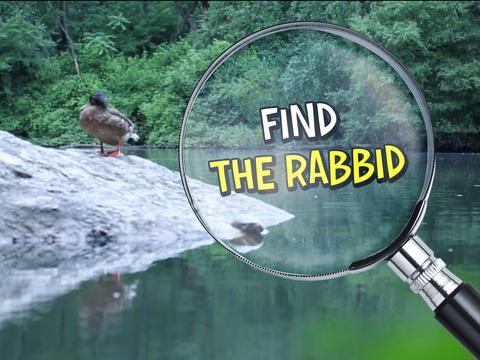 Rabbids Invasion: Find the Rabbid!