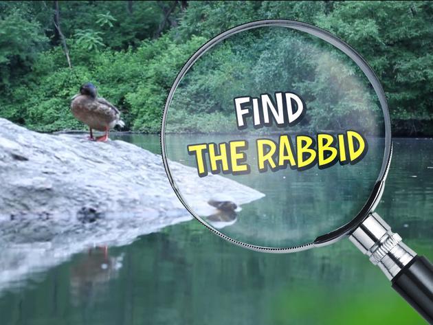 Find the Rabbid!