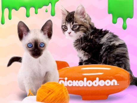 Kittens Choice Awards