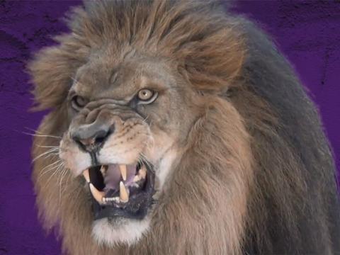 The Roar Challenge