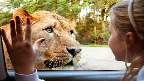 WIN A KNOWSLEY SAFARI TOUR!