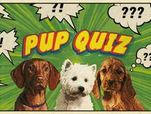 Kira Pup Quiz