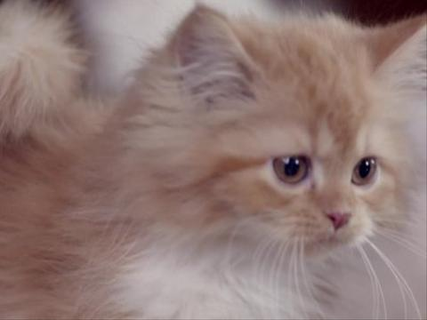 Sneak Peek: Viral Kittens
