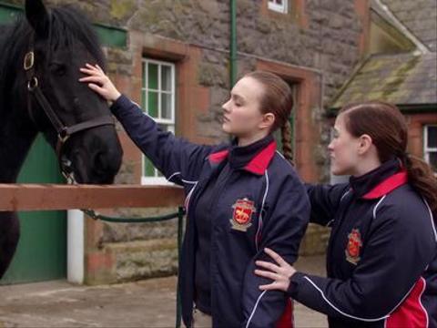Choosing a Horse