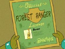 Forest Ranger Licence