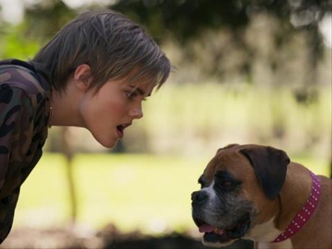 Elf VS Dog