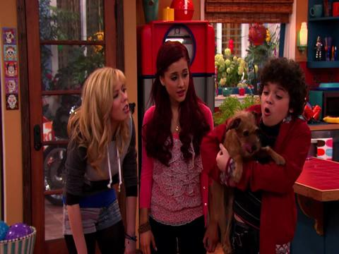 Perro robado - Sam Y Cat