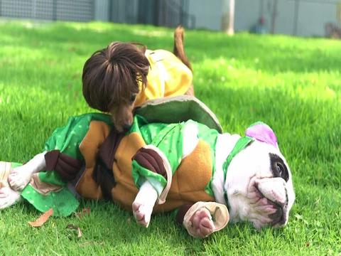 Tini Nindzsa... kutyák?!